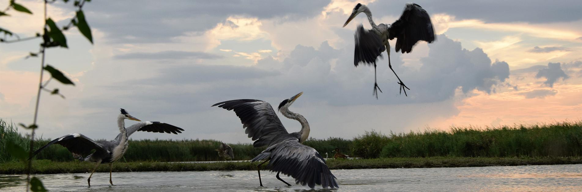 Fåglar i Ungern